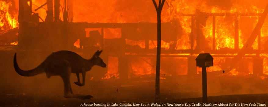 Kangourou fuyant devant les flammes d'un méga-feux en Australie